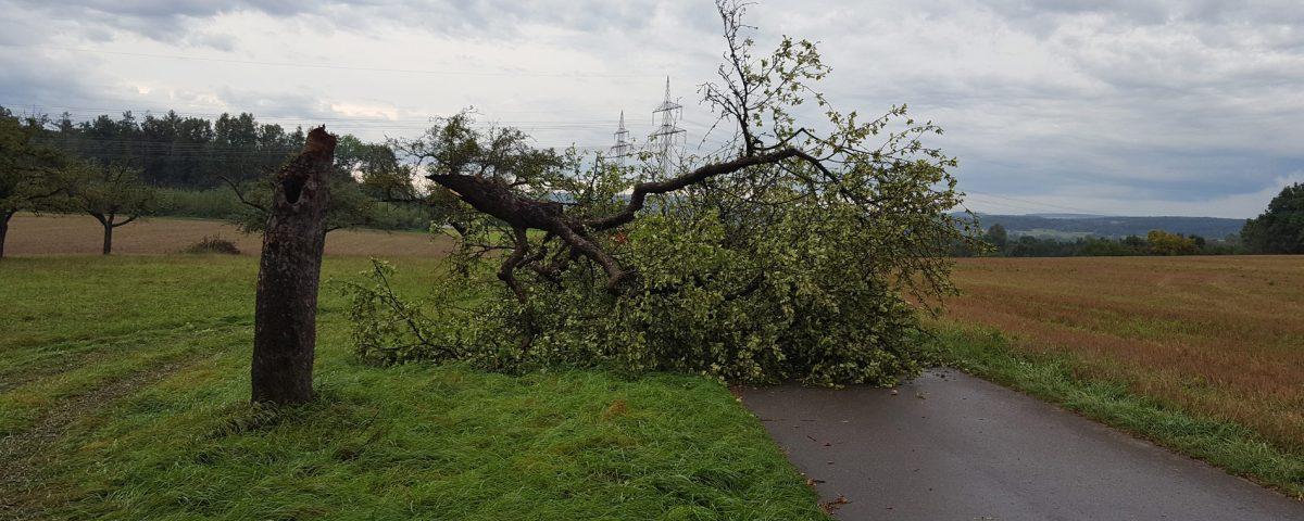 Baum auf Straße